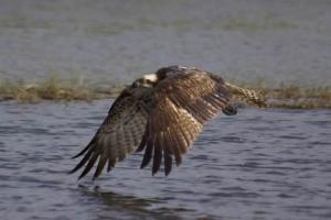 ¡Lo consiguió! ¡Arribó al río Senegal!