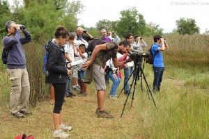 Salidas para observación de águilas pescadoras en Urdaibai